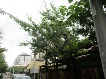 愛知県 名古屋市 庭木 越境 枝
