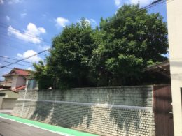隣家に越境した庭木2