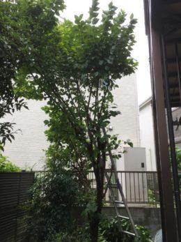 名古屋市天白区 伐採