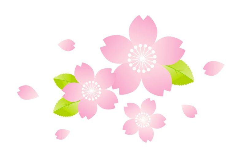 イラスト 桜