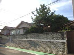 隣家に越境した庭木1