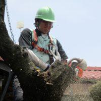 お客様のご要望に沿って、しっかり・すっき り庭木を伐採します!