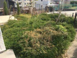 草取り 草刈 お庭 家1