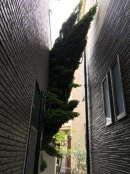 愛知県名古屋市西区 伐採